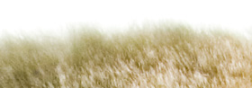 Detail of fur over white