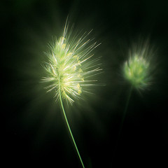 Fireworks (by johnnyoptic)