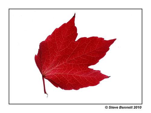 Autumn Red  365/149
