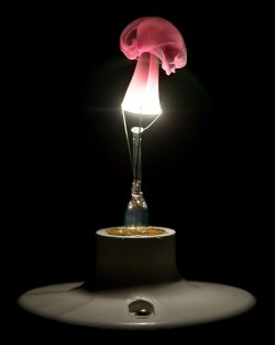 Give A Bulb The Hot & Cold Treatment For Interesting Burning Bulb Shots