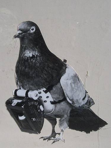GoPro Behind you! Dr Julius Neubronners Pigeon Camera of 1908