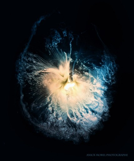 Photographs Of Smoke From Burnt Light Bulbs Hitting Glass
