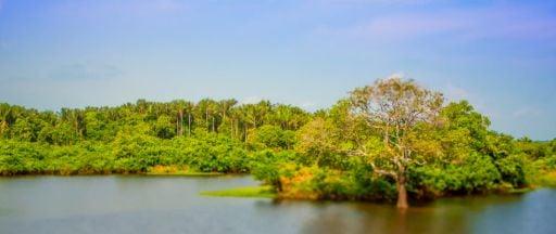 Amazônia Manauara Is A Beautiful Time LApse of the Manaus / Amazon