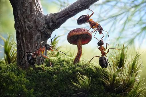 Andrey Pavlov Tells Wonderful Stories With Real Live Ants