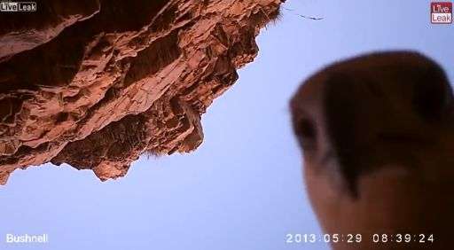Sea Eagle Steals Camera, Goes Home, Takes A Selfie