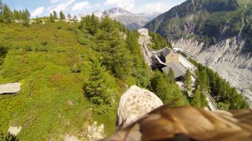 Camera Strapped To Eagle Shows The Glorious French Mountains