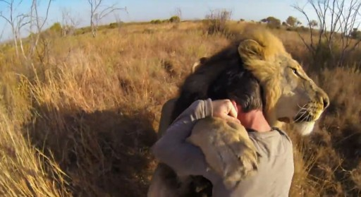 Gopro Captured Footage Of Man And Lions Bro-Wrestling (In A Good Way)