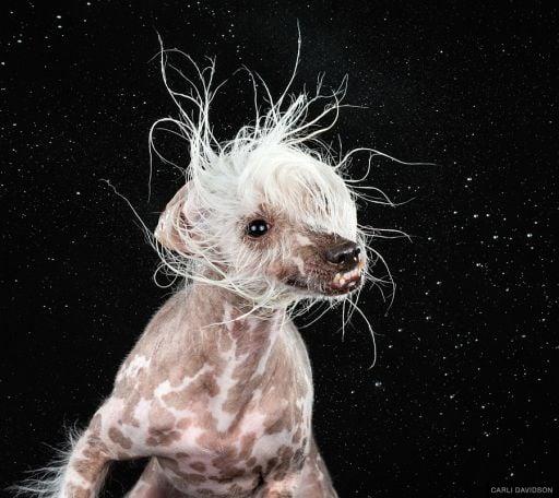Photographer Carli Davidson Makes Epic Portraits Of Splashing Dogs