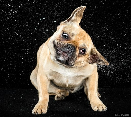 Photographer Carli Davidson Makes Epic Portraits Of Splashing Dogs