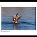 Mallard Dance (Kirk Howard)