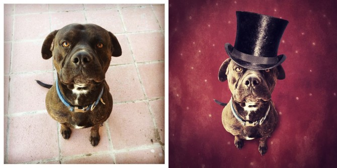 Photographer Creates Surreal Photos Of Homeless Dogs, Helps Them Find A New Home