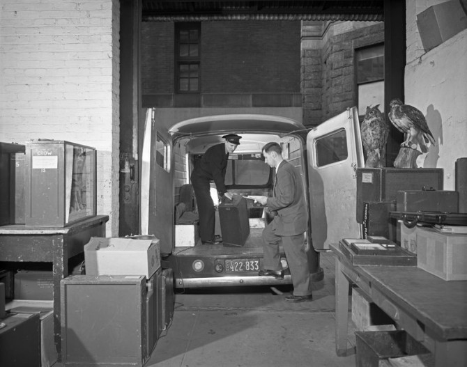 Carlton Beil inspecting school service truck, 1950. Museum specimens and mini diorama cases were loaned to NYC public school and delivered by Museum  vehicles. Credit: Alex J. Rota (321617)