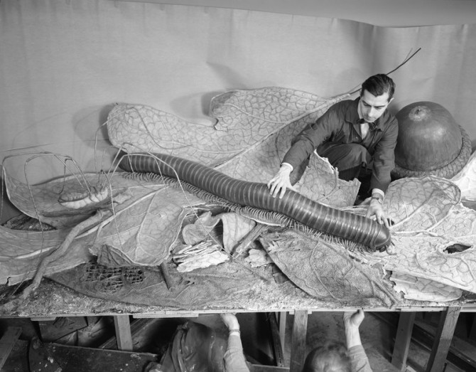 Installing models for the Forest Floor exhibit, 1958. Credit: Alex J. Rota (325494)