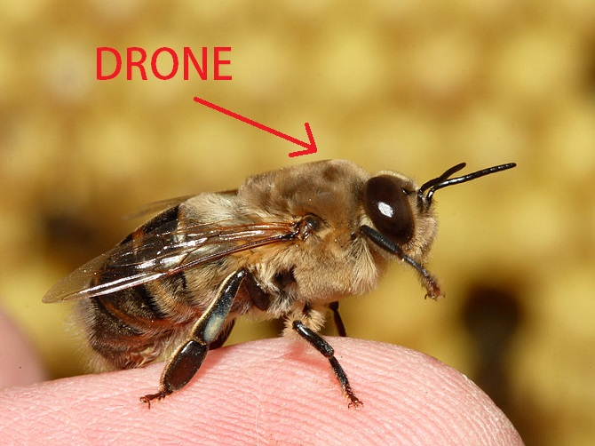 Drone Bee Aerial Photography and Video