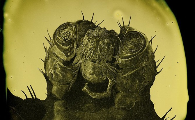 DeSieno-Ixodes-scapularis-title