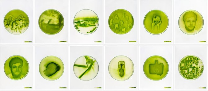 algae_photos