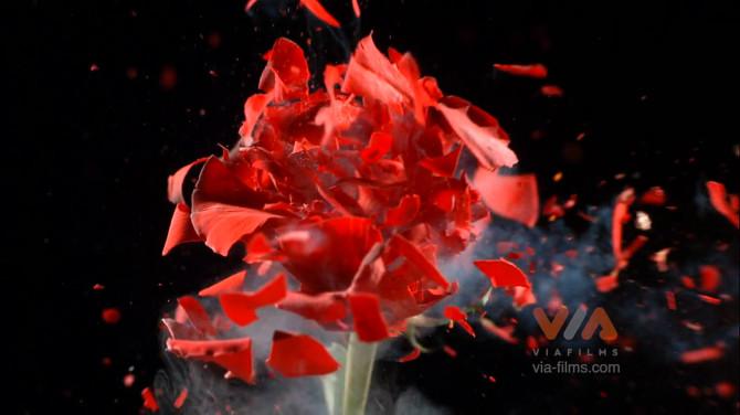 exploding_flowers2