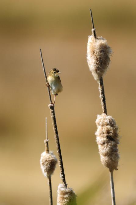 carlos-wildlife-photographer2