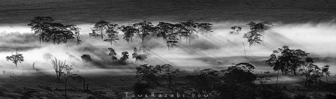 Ngorngoro forest (Tanzania)