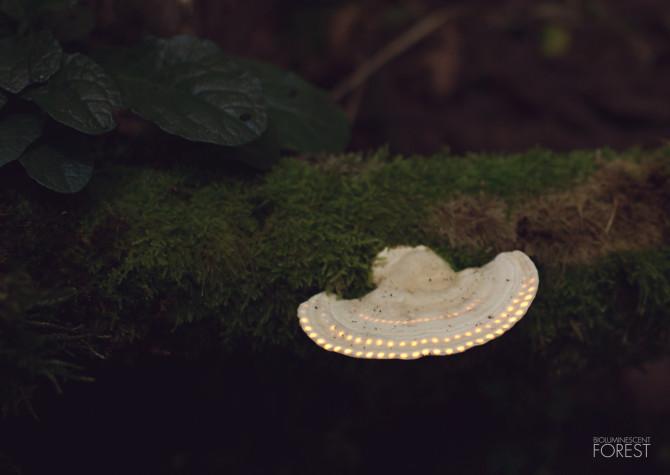 Ufo_Mushroom