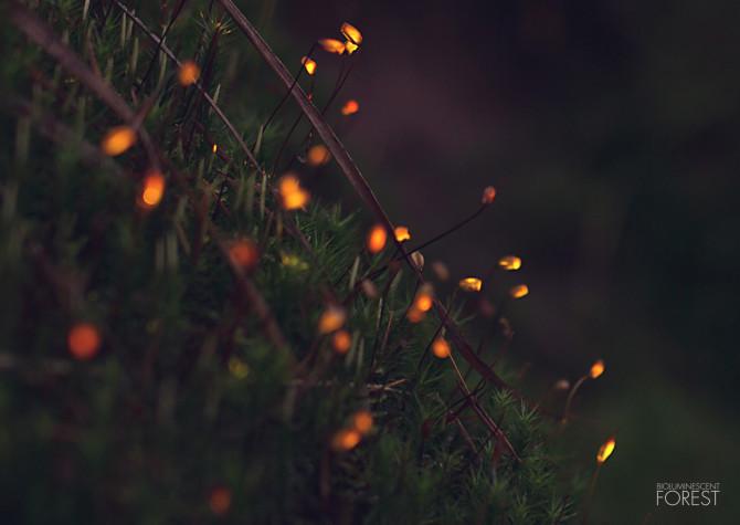 moss_dots_closeup