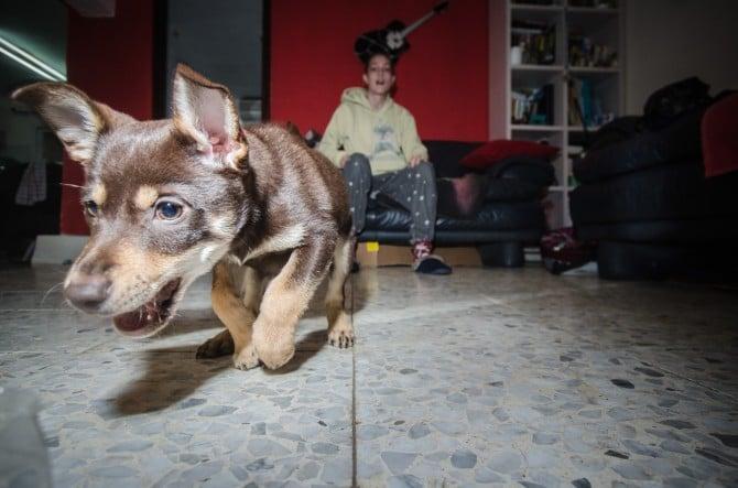 pet laser (8)