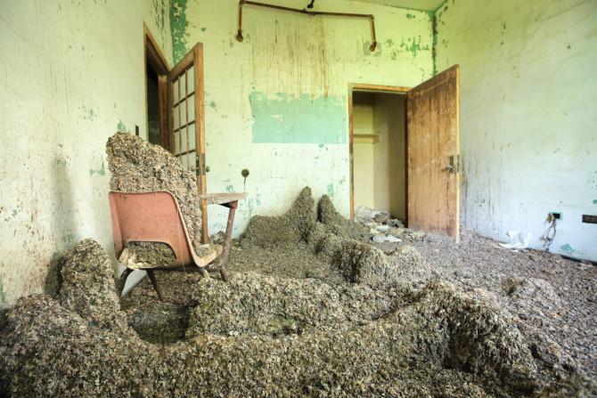 Pigeon poop covers abandoned Queens mental hospital