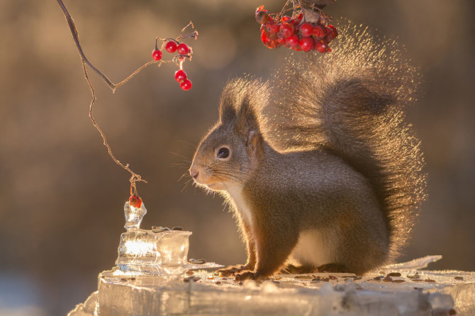 squirrel bright tail