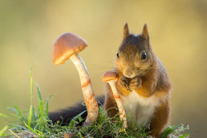 whisper mushroom