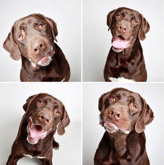 adopted-dog-teton-pitbull-humane-society-utah-10