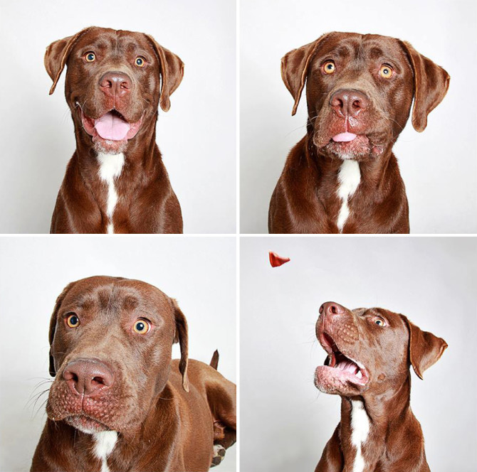 adopted-dog-teton-pitbull-humane-society-utah-12
