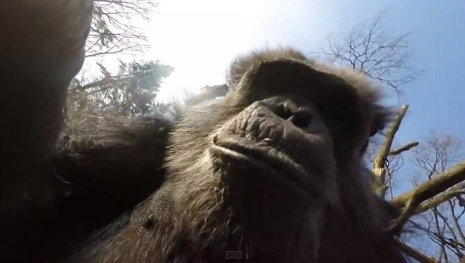 chimp-drone-01
