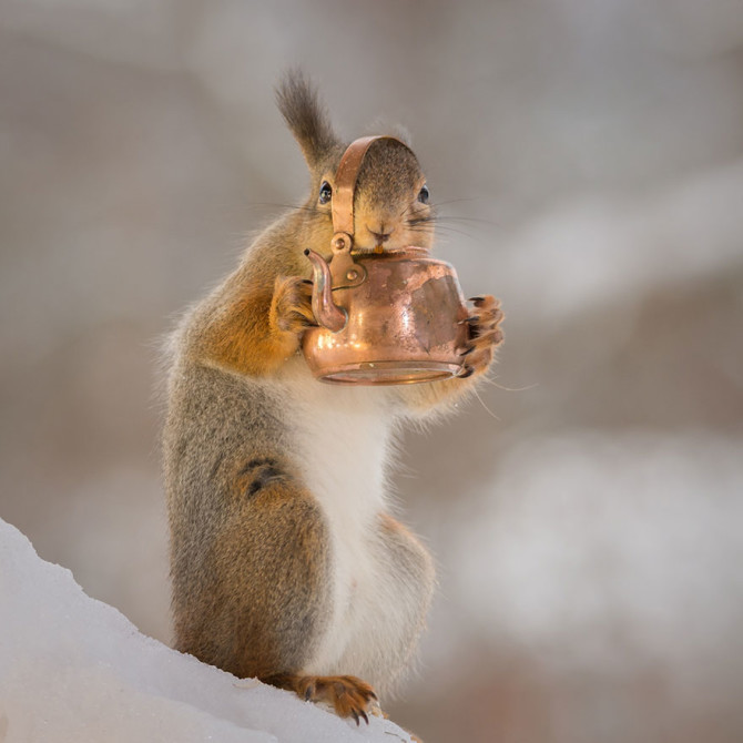 cute-squirrel-photography-geert-weggen-20