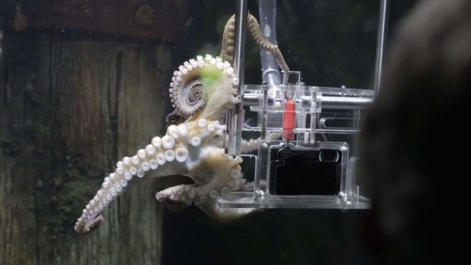 Rambo firing the red shutter release with a tentacle.