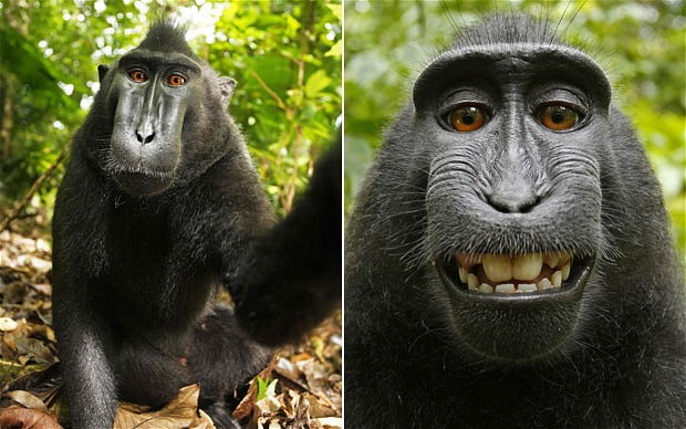The selfies captured with David Slater's camera. But does he own the copyright?