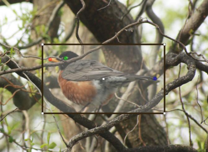 bird-identifier