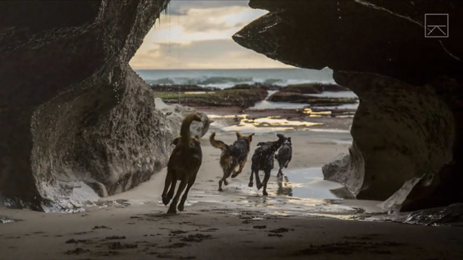 working-dogs2