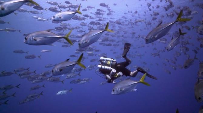 Sony A7R II Underwater Video