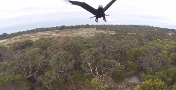 adam-lancaster-eagle-drone