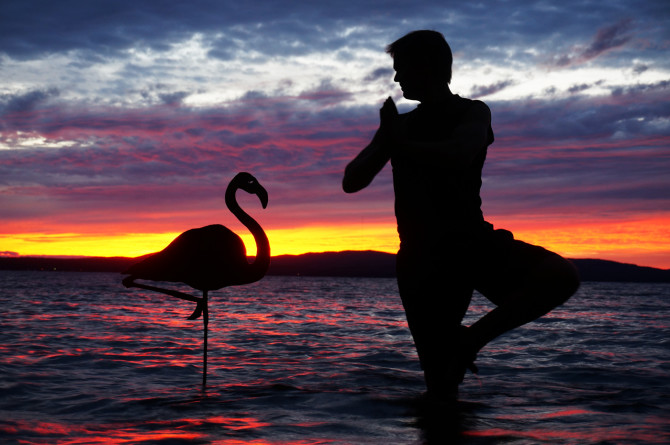 """""""In the yoga world, we call this the Standing Tree Pose,"""" I said. """"Oh. In the flamingo world, we call this standing,"""" the flamingo replied."""