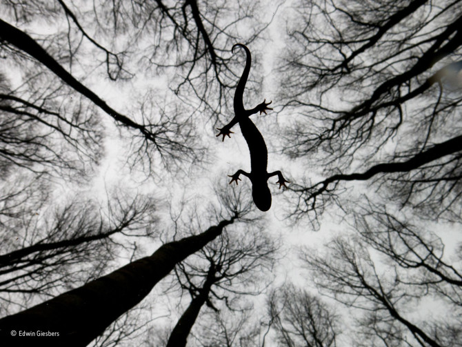 Edwin Giesbers / Wildlife Photographer of the Year 2015