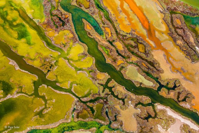 Pere Soler / Wildlife Photographer of the Year 2015