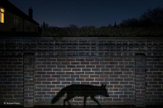Richard Peters / Wildlife Photographer of the Year 2015