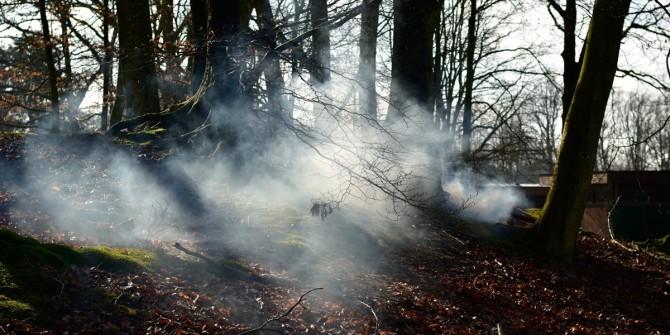 belgian-forest-13