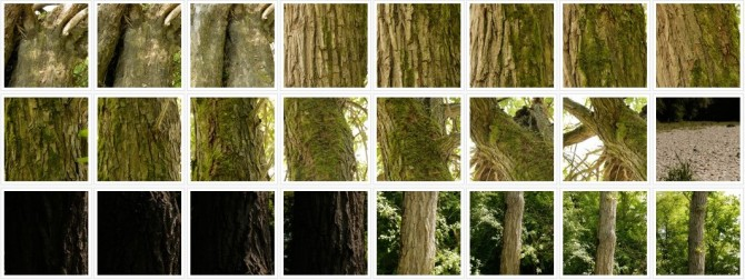 trees-and-bark