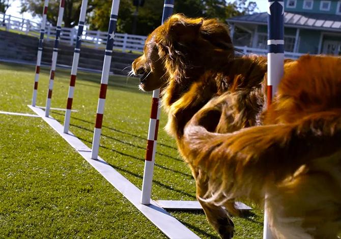 Dog_Challenge_2