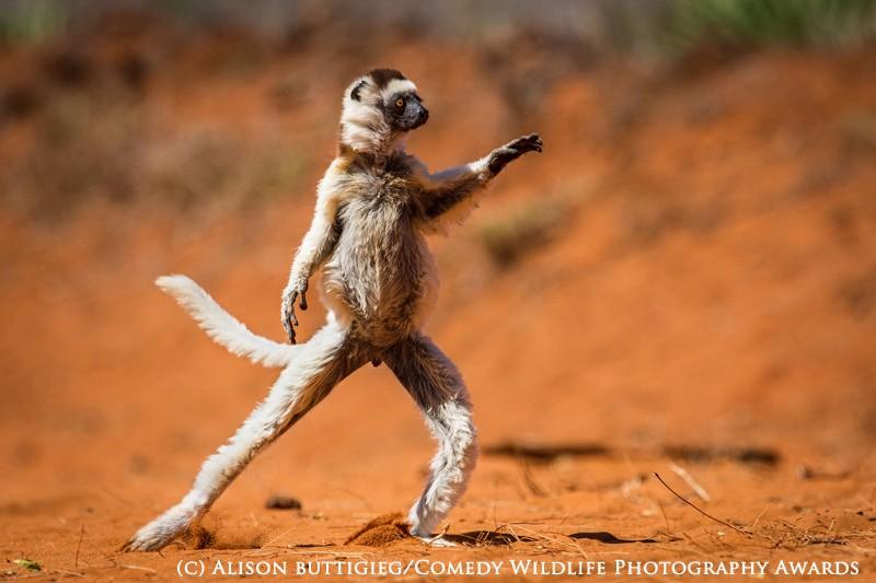 Alison Buttgieg / Comedy Wildlife Photography Awards