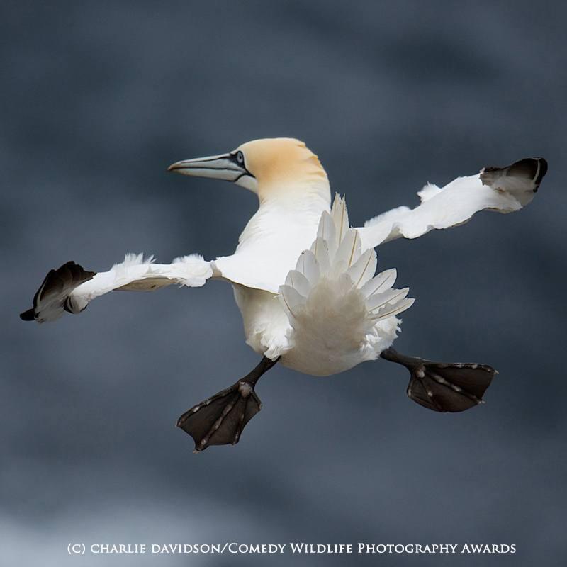 Charlie Davidson / Comedy Wildlife Photography Awards