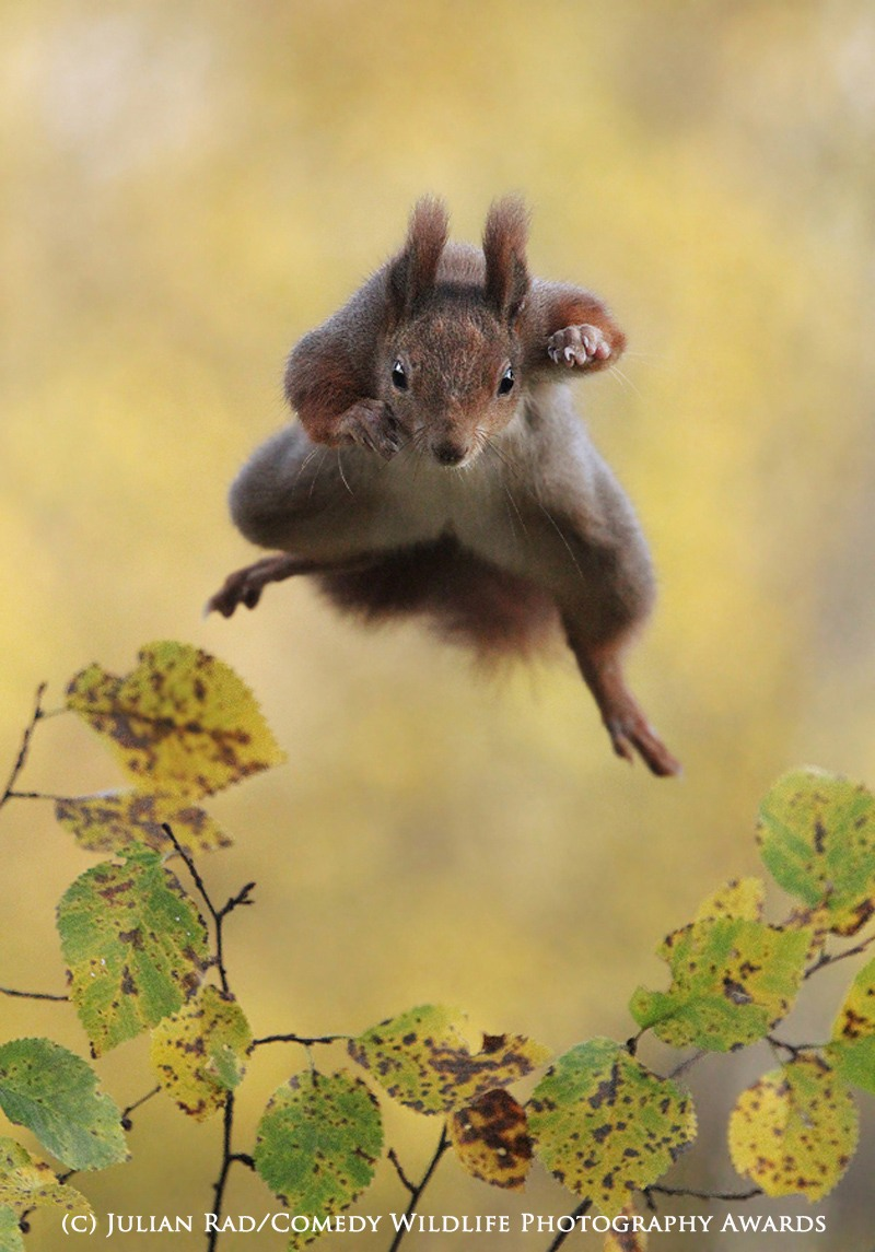Julian Rad / Comedy Wildlife Photography Awards