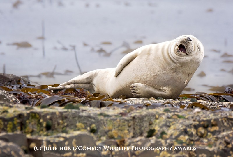 Julie Hunt / Comedy Wildlife Photography Awards